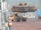 Sayward Logging